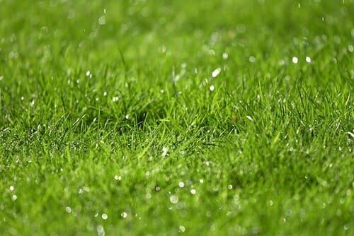 gazon-mouillé-herbe-terrain-de-foot